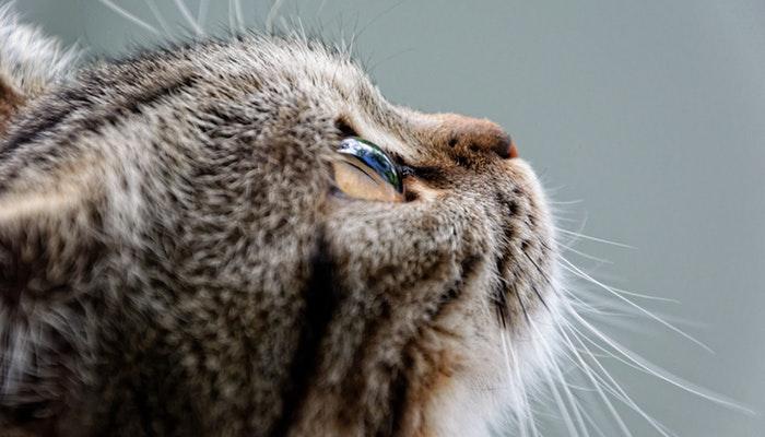 crna maca lice sjedi besplatno maca spanking porno